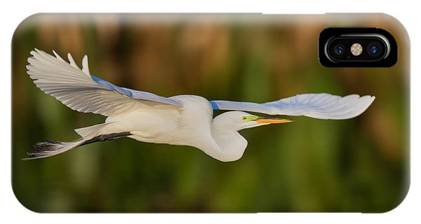 Fauna iPhone Case - Gliding Great Egret by Andres Leon
