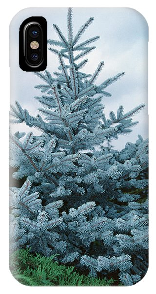 Spruce iPhone Case - Globe Blue Spruce by G Gray/science Photo Library
