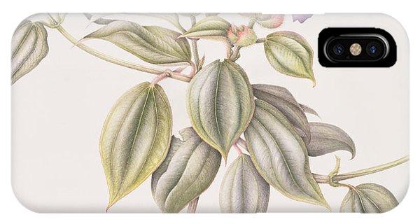 Violet iPhone Case - Glory Flower Tibouchina Urvilleana 1999 Wc On Paper by Margaret Ann Eden