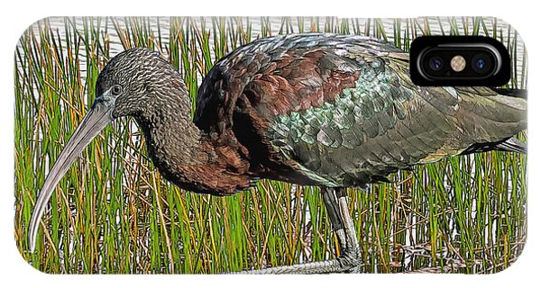 Glossy Ibis IPhone Case