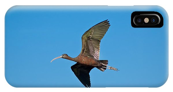 Wakulla iPhone Case - Glossy Ibis by Rich Leighton