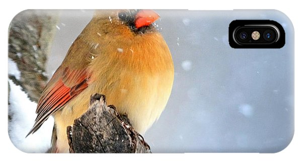 Glowing In The Snow IPhone Case
