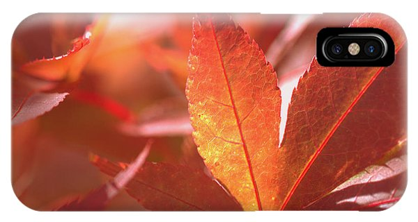 Glowing Red Leaves IPhone Case