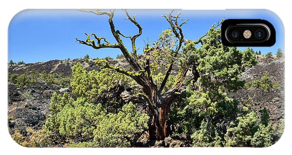 Gnarled Tree On The Lava Beds Phone Case by Rich Rauenzahn