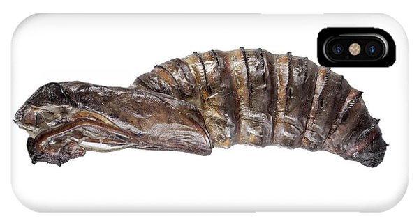 Chrysalis iPhone Case - Goat Moth Pupa by F. Martinez Clavel