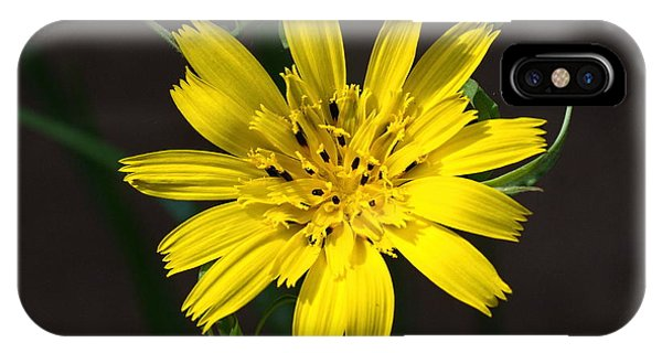Goats Beard Flower IPhone Case