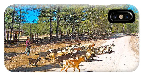 Goats Cross The Road With Tarahumara Boy As Goatherd-chihuahua IPhone Case