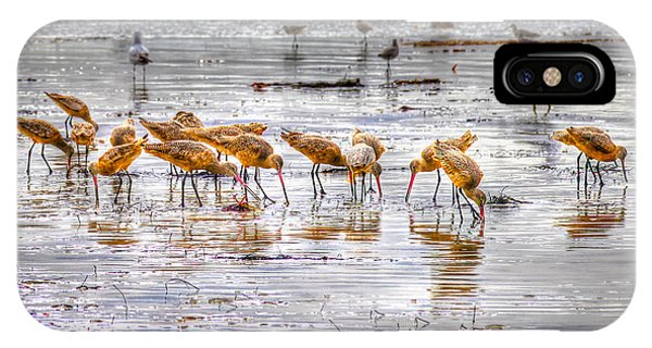 Godwits At San Elijo Beach IPhone Case