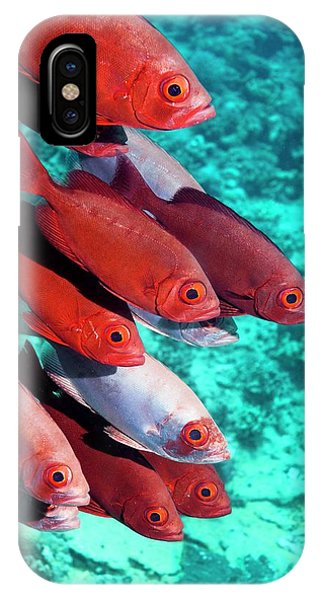 Ichthyology iPhone Case - Goggle Eyes On A Reef by Georgette Douwma