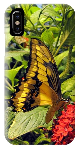 Gold Giant Swallowtail IPhone Case
