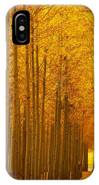 Golden Alley IPhone Case