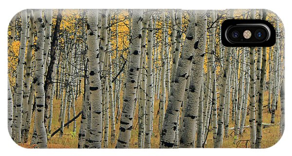 Golden Aspen Forest IPhone Case