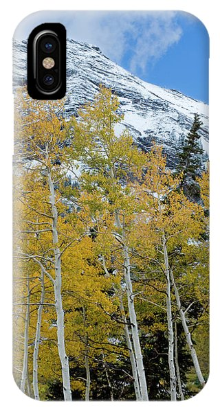 Golden Aspen Trees In Fall Colors IPhone Case
