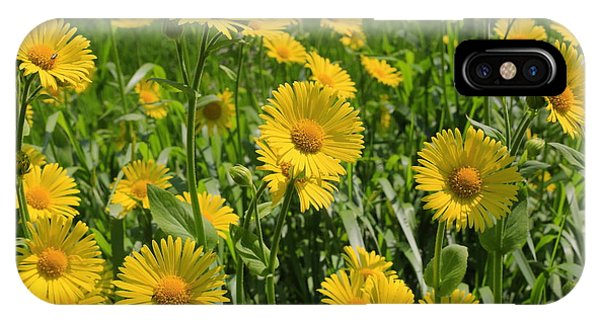 Golden Asters IPhone Case