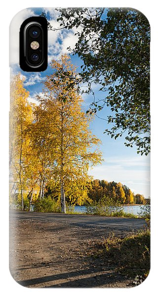 Golden Autumn Birches IPhone Case