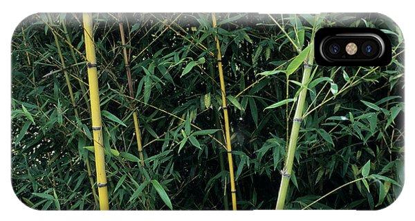 Golden Gardens iPhone Case - Golden Bamboo (phllostachys Aurea) by Sally Mccrae Kuyper/science Photo Library