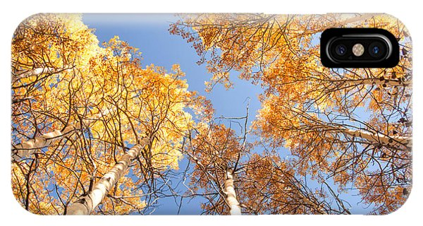 Golden Canopy IPhone Case