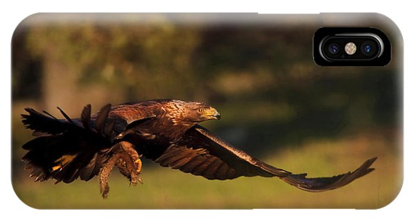 Golden Eagle On The Hunt IPhone Case