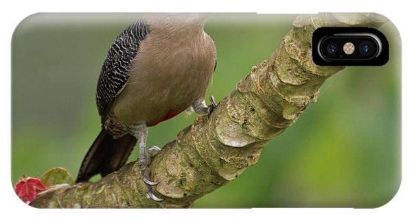 Belize iPhone Case - Golden-fronted Woodpecker (melanerpes by William Sutton