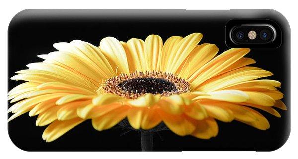 Golden Gerbera Daisy No 2 IPhone Case