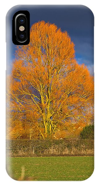 Golden Glow - Sunlit Tree IPhone Case