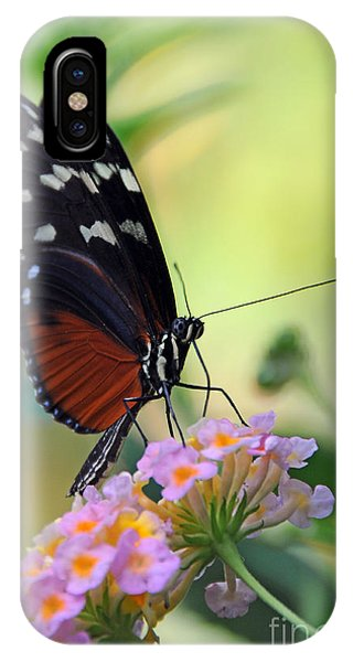 Golden Helicon Butterfly - Say What IPhone Case