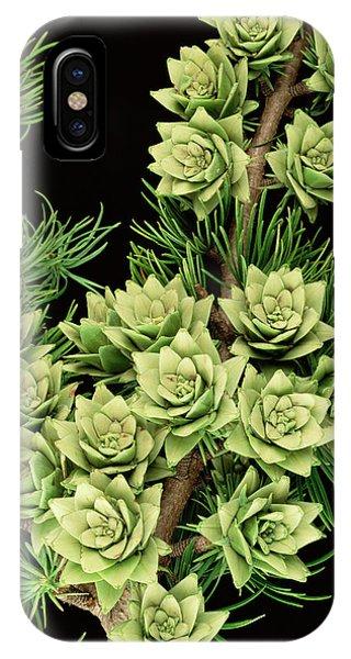 Golden Gardens iPhone Case - Golden Larch (pseudolarix Amabilis) by Royal Botanic Garden Edinburgh/science Photo Library