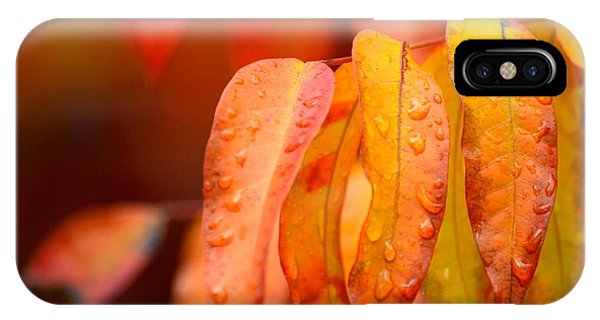 Golden Leaves In The Rain At Stanford IPhone Case