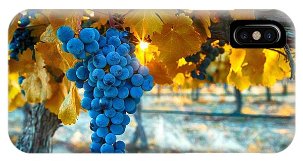 Golden Leaves With Grapes IPhone Case