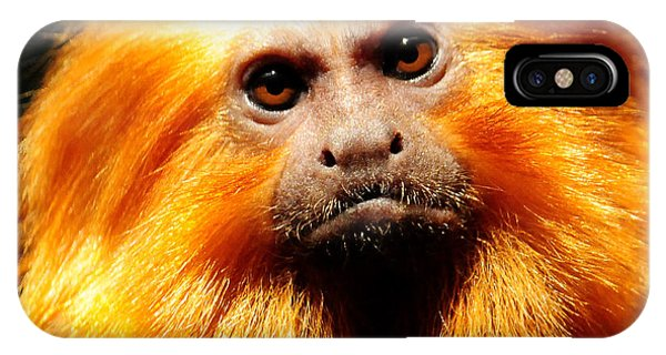 Golden Lion Tamarin IPhone Case