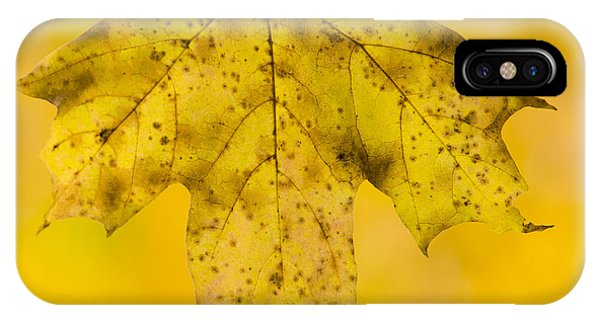 Yellow iPhone Case - Golden Maple Leaf by Sebastian Musial