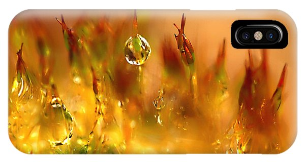 Golden Palette IPhone Case