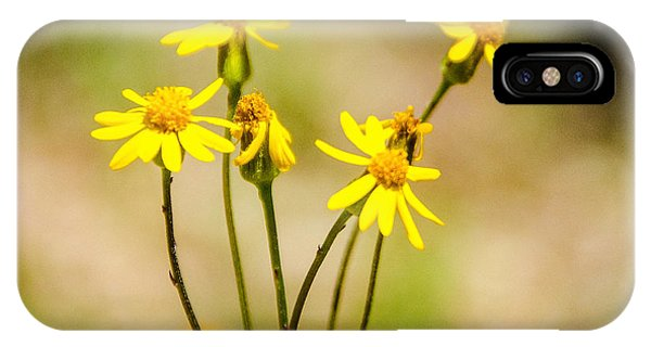 Golden Ragwort IPhone Case