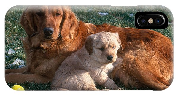 Golden Retriever And Puppy IPhone Case
