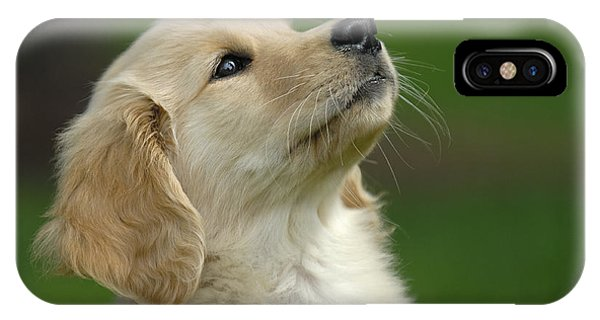 Golden Retriever Puppy IPhone Case
