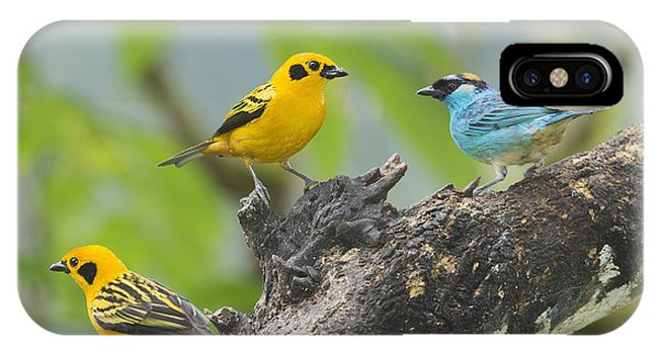 Golden Tanagers IPhone Case