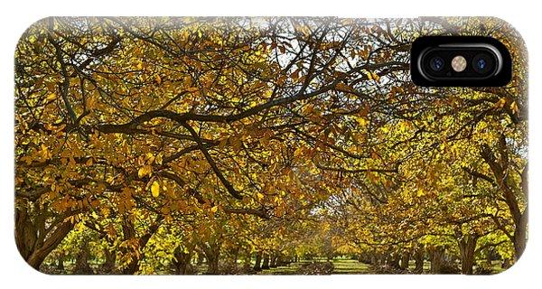 Golden Walnut Orchard IPhone Case