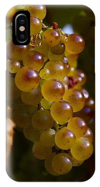 Golden Wine Grapes IPhone Case