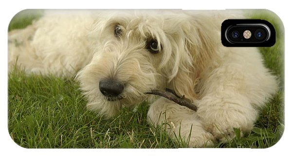 Goldendoodle Pup With Stick IPhone Case