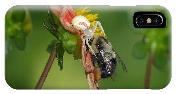 Goldenrod Spider IPhone Case