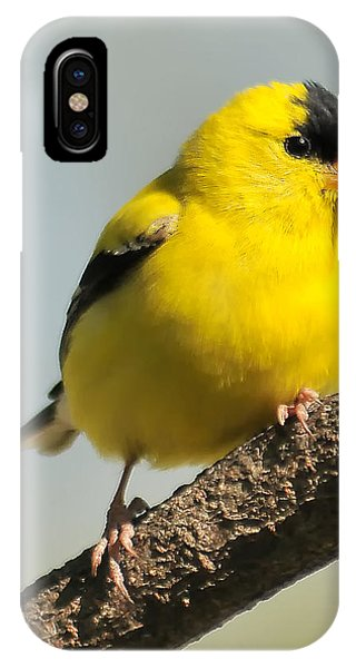 Goldfinch 306 IPhone Case