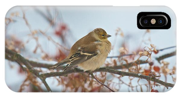 Goldfinch Brrrr IPhone Case