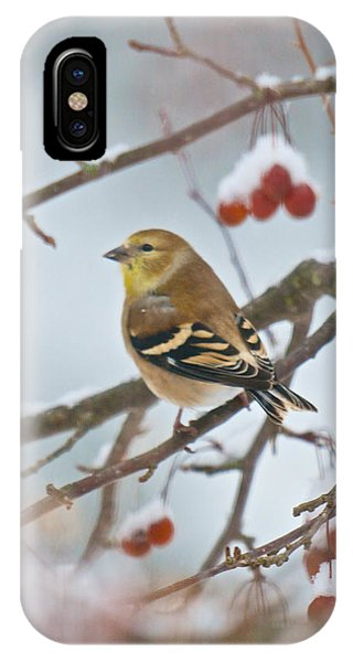Goldfinch In Snow IPhone Case
