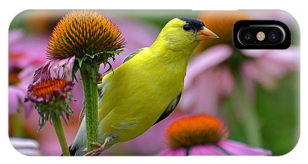 Goldfinch On A Coneflower IPhone Case