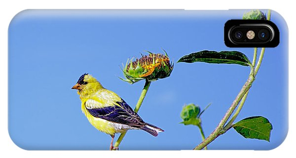 Goldfinch On Stem IPhone Case