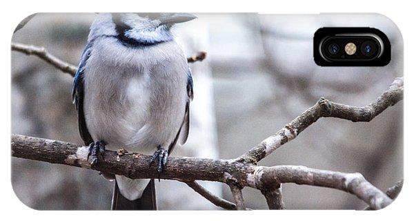 Gorgeous Blue Jay IPhone Case