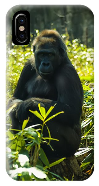 Gorilla Sitting On A Stump IPhone Case