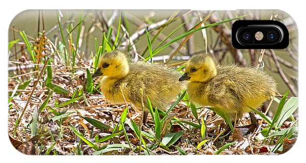 Goslings iPhone Case - Little Ones by Betsy Knapp