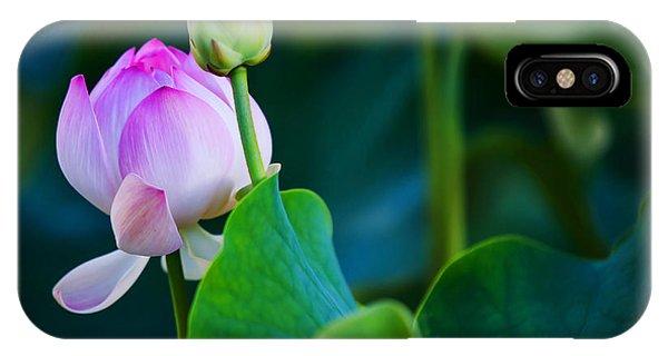 Graceful Lotus. Pamplemousses Botanical Garden. Mauritius IPhone Case