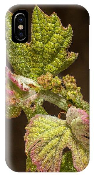 Grape Bud Break IPhone Case